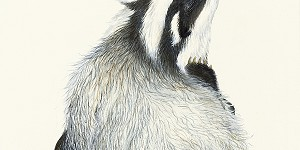 painting of a badger by Irene Brierton